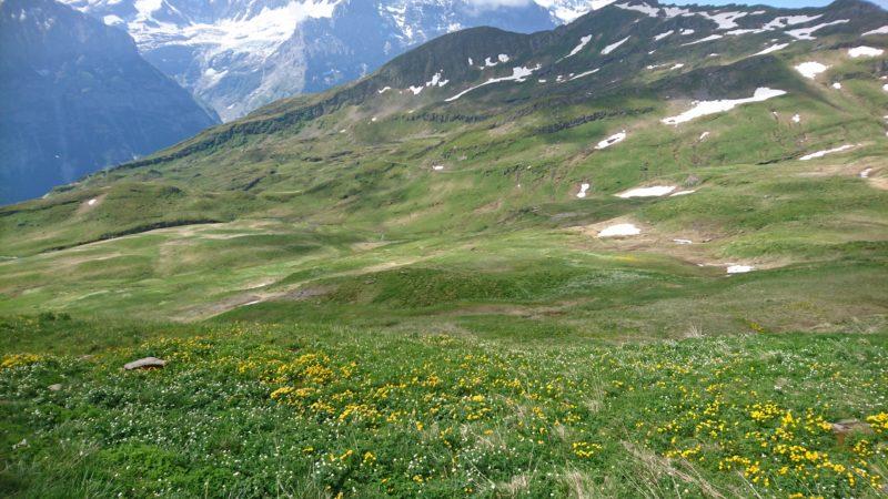 バッハアルプゼーへの登山道